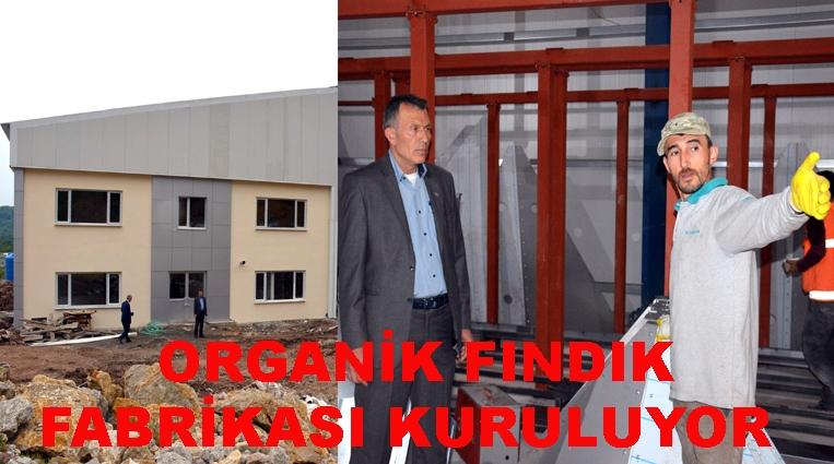 TÜRKİYE'DE İLK ORGANİK FINDIK FABRİKASI KURULUYOR.